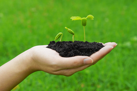 hand holding and caring a young green plant growing in a germination sequence on green background   planting tree   growing a tree   plant seedling photo