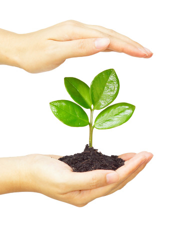 two hands holding and caring a young green plant planting tree growing a tree love nature save the world