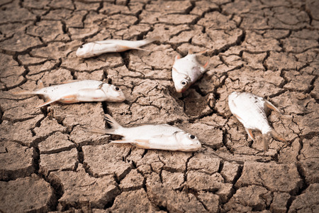 scarcity: fish died on cracked earth   drought   river dried up  famine   scarcity   global warming   natural destruction   extinction
