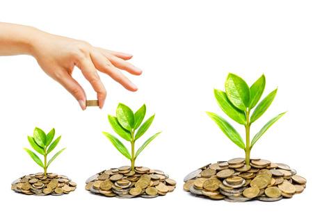 gobierno corporativo: la mano que da una moneda de oro a un árbol que crece en los montones de monedas de oro - el ahorro de dinero