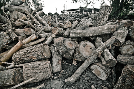 deforestation - cutting down trees photo