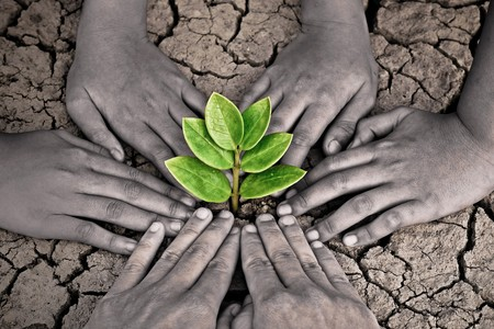 scarcity: hands joining together around a tree growing on cracked earth Stock Photo