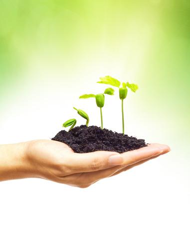 手を保持していると木植物実生の成長の木を植えること緑の背景を持つ若い緑の植物を気遣うこと