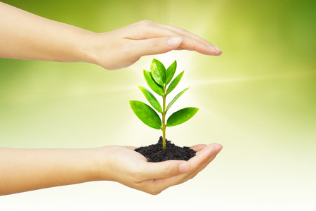 conservation: two hands holding and caring a young green plant   planting tree   growing a tree   love nature   save the world Stock Photo