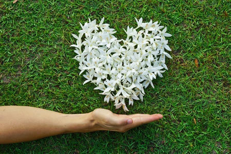 green: hands holding white flowers arranged as a heart shape on green grass