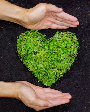 preservation: hands holding green heart shaped tree  tree arranged in a heart shape  love nature  save the world  heal the world  environmental preservation