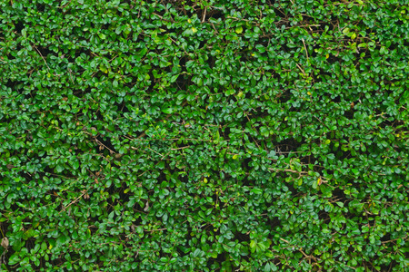 녹색 잎 벽