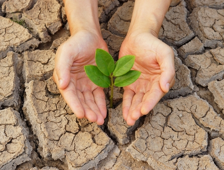 hands holding tree growing on cracked earth photo
