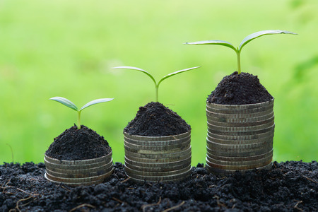 stock predictions: trees growing on coins  csr  sustainable development  economic growth  trees growing on stack of coins
