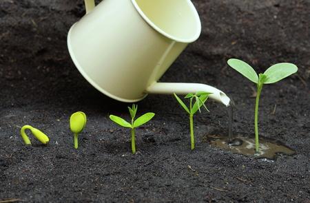 las plantas que crecen en la secuencia de germinación de las semillas en suelo de riego, el concepto de la evolución