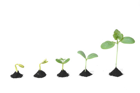 Sequence of seed germination on soil, evolution concept photo