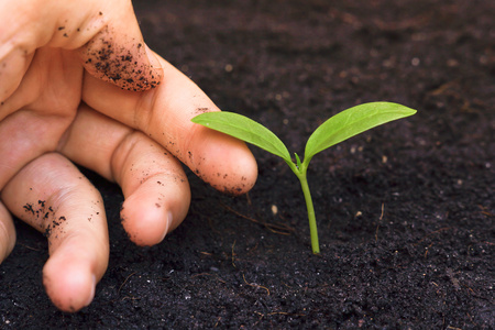 tenderly: mano teneramente toccando una giovane pianta verde  albero che cresce  salvare l'ambiente