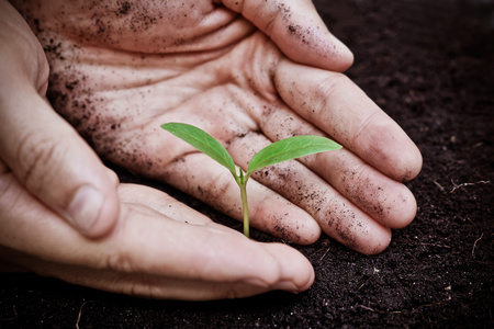 young plant: hands holding a young green tree