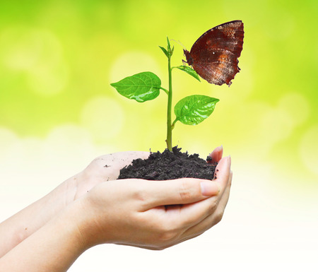 two hands holding and caring a young green plant with a butterfly