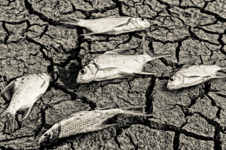 scarcity: fish died on cracked earth  Stock Photo