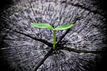 young green plant growing on dead tree trunk