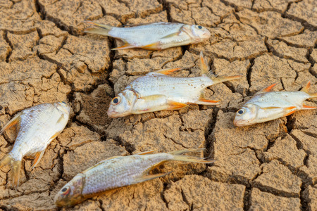 famine: fish died on cracked earth  drought  river dried up famine  scarcity  global warming  natural destruction  extinction Stock Photo