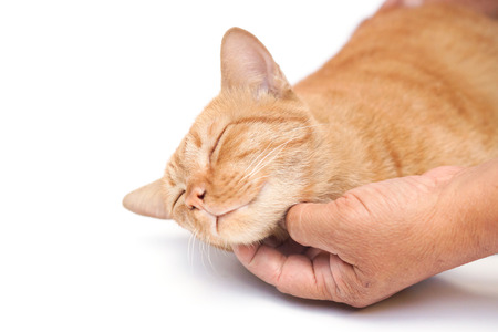 hand rubbing: hand gently touching and rubbing a cat