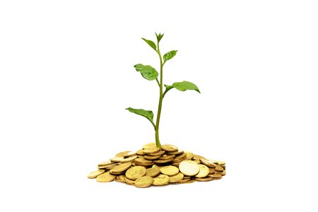tree growing on coins / csr / sustainable development Stock Photo