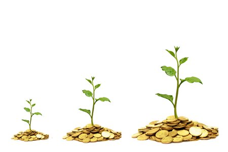 tree growing on coins  csr  sustainable development photo