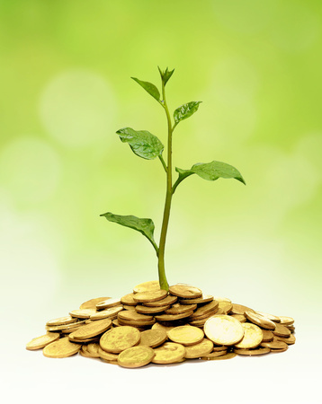 trees growing on golden coins / business growth with csr Stock Photo