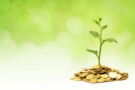 corporate finance: trees growing on golden coins  business growth with csr