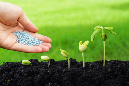 hand giving chemical fertilizer to plants growing in sequence of seed germination on soil, evolution concept Stockfoto