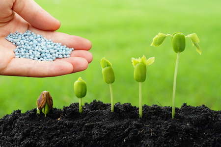 chemical fertilizer: hand giving chemical fertilizer to plants growing in sequence of seed germination on soil, evolution concept Stock Photo