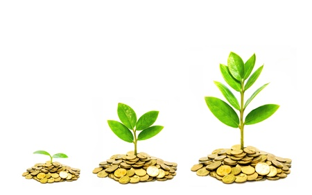trees growing on piles of golden coins / business with csr practice Stockfoto