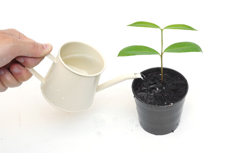 hand watering a young tree growing in a black plastic pot with isolated background photo