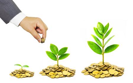 Mains d'un homme d'affaires donnant des pièces de monnaie aux arbres qui poussent sur des pièces d'or - La croissance des affaires et de la richesse avec préoccupation la RSE Banque d'images - 38228097