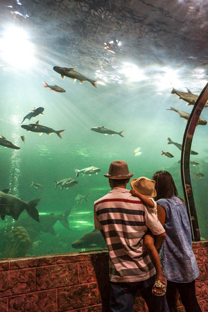 fresh water fish: Abstract blur of a family watching fresh water fish in the aquarium Stock Photo