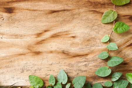 wood plank wall texture with green creeper plant