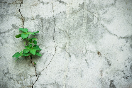 struggles: a tree struggles to grow on a concrete wall