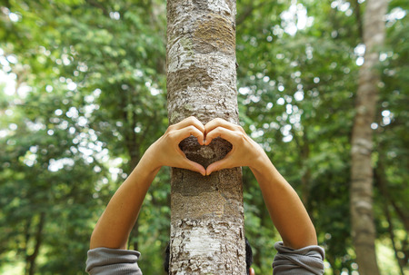 environment: hands forming a heart shape around a big tree  protecting tree and love nature