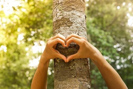 Hände, die eine Herzform um einen großen Baum bilden, der Baum schützt und Natur liebt