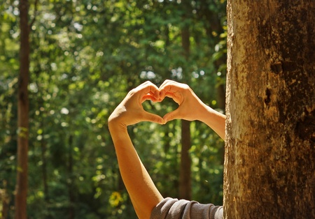 protection symbol: hands forming a heart shape around a big tree  protecting tree and love nature