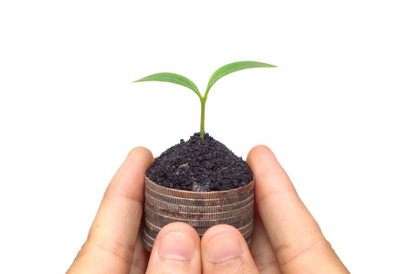 hand holding a young plant growing on a stack golden coins  Business with csr practice  Green Business