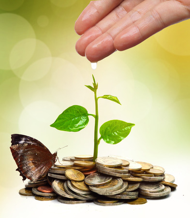 hand watering a young plant growing on a pile golden coins  Business with csr practice  Green Business Imagens