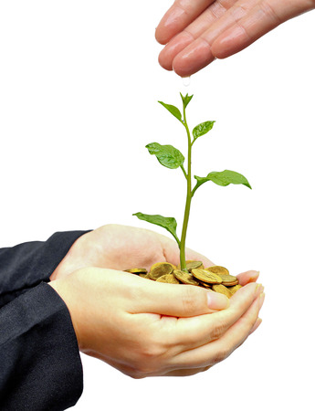 hand watering a young plant growing on stacks golden coins  Business with csr practice  Green Business Imagens