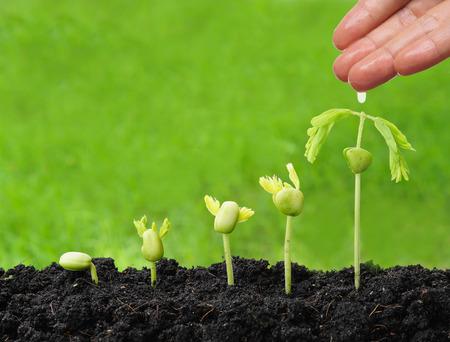 手の緑の背景を持つ一方で発芽シーケンスで育つ若い植物に水をまく