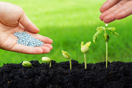 hand giving chemical fertilizer and water to plants growing in sequence of seed germination on soil evolution concept