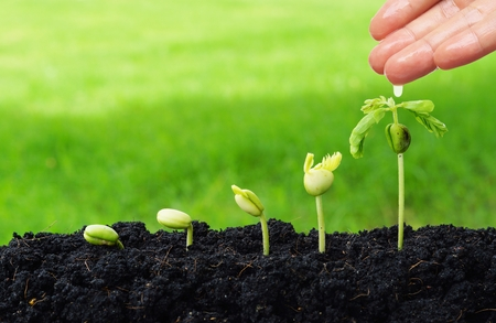 hand watering young plants growing in germination sequence  green background Stockfoto