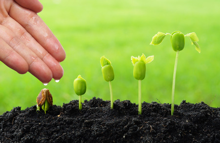 hand watering young plants growing in germination sequence  green background 스톡 콘텐츠