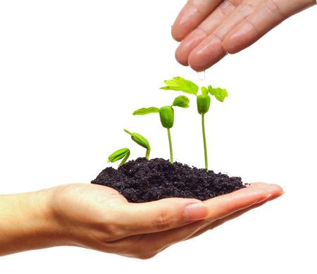 手の発芽シーケンスで若い植物に水をまく