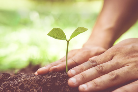 fertile: Hands of farmer growing and nurturing tree growing on fertile soil with green and yellow bokeh background  protect nature  love and care nature