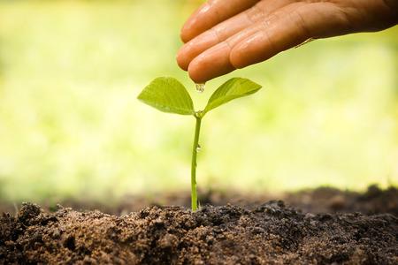 Hände Pflege und Bewässerung eine junge Pflanze Liebe und Natur Konzept schützen