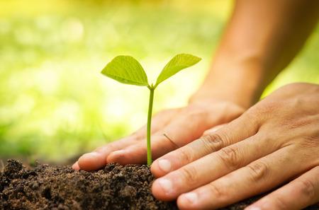Hände der Bauern wachsen und Pflege Baum wächst auf fruchtbaren Boden mit grünen und gelben Hintergrund Bokeh Lizenzfreie Bilder