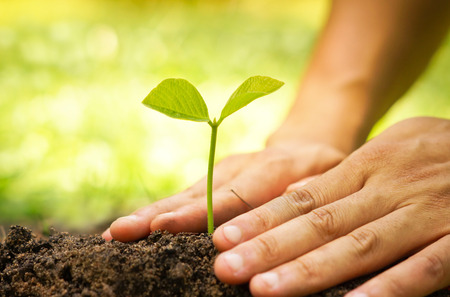 Manos de agricultor que cultiva y nutrir árbol que crece en el suelo fértil con el fondo bokeh verde y amarillo Foto de archivo