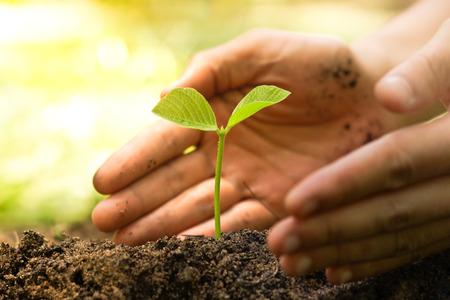 Manos de agricultor que cultiva y nutrir árbol que crece en el suelo fértil con el fondo bokeh verde y amarillo